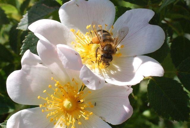 con_polen1