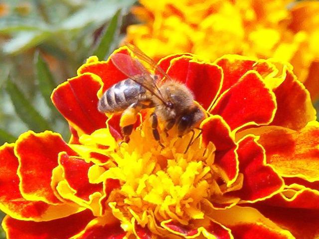 Porque son importantes las abejas para niños