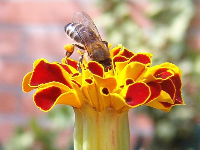 con_polen3