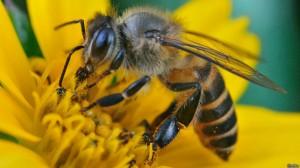 abejas-bbc-2