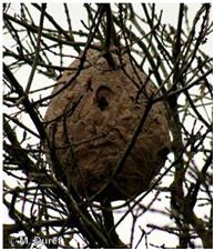 nido-vespa