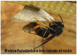 reina-vespa-1