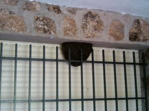 enjambre-abejas