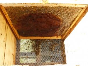 muchas provisiones para pocas abejas 1