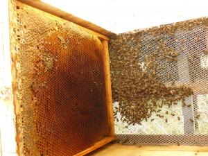 muchas provisiones para pocas abejas2