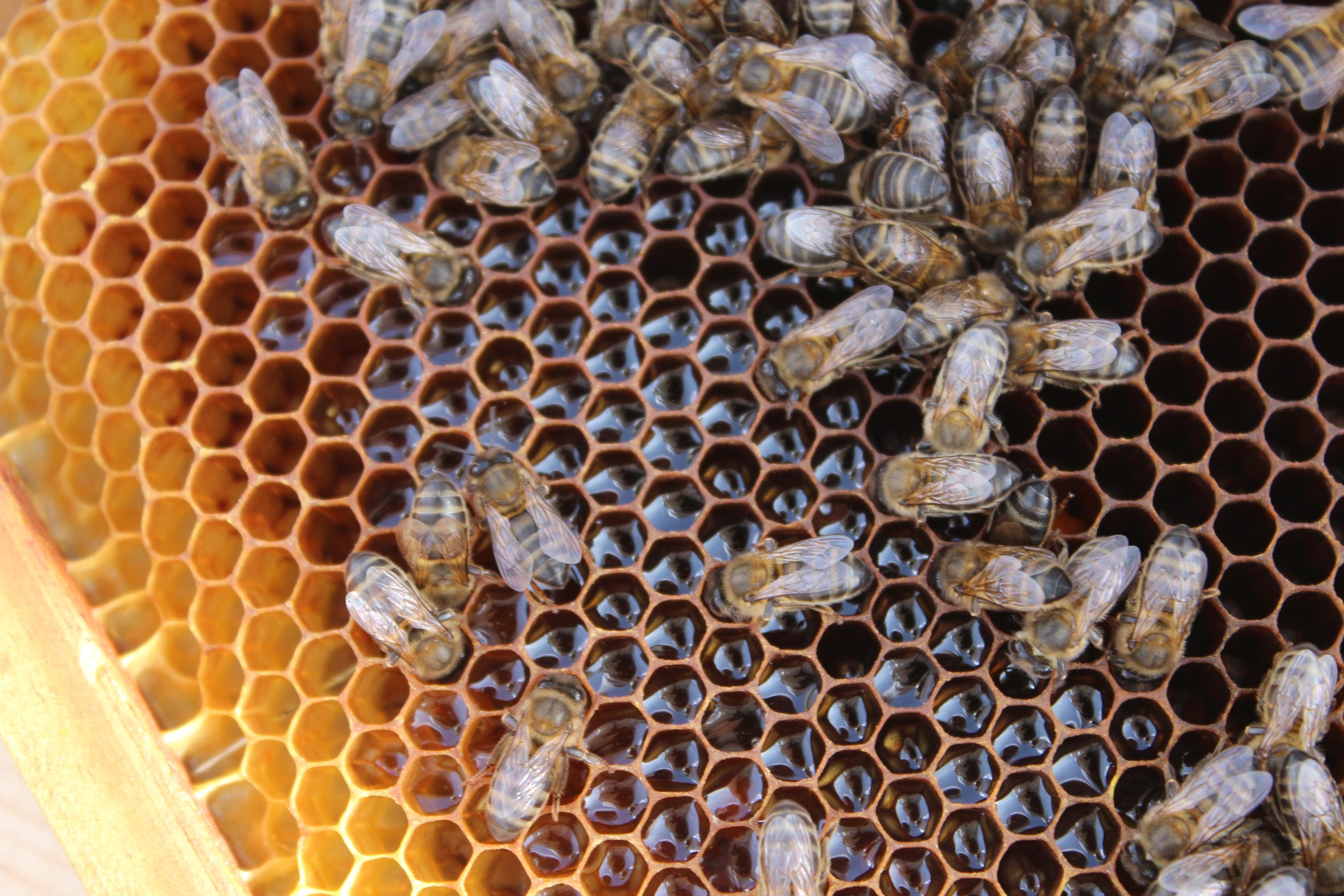 Hablemos de la miel desde el punto de vista terapéutico:   Fundación ...