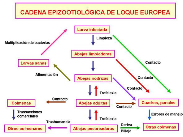 Cadena epizootiologica