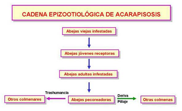 Cadena epizootiológica